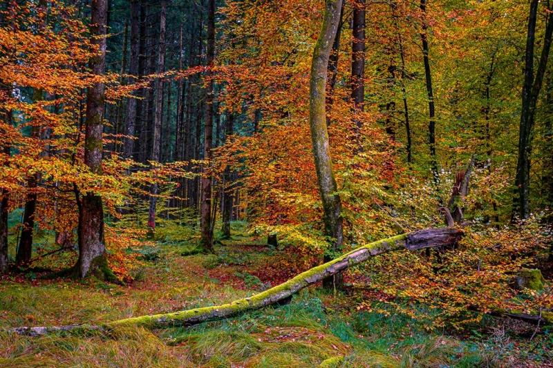 01-2020-10-24-Ebersberger-Forst-abstrakter-Herbst-001-_DSC6989