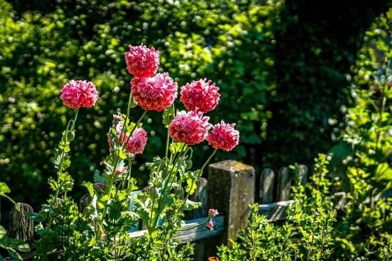 Îm-Blumengarten-06