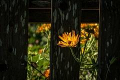 Îm-Blumengarten-02